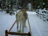 promenade en traineau avec un renne en laponie