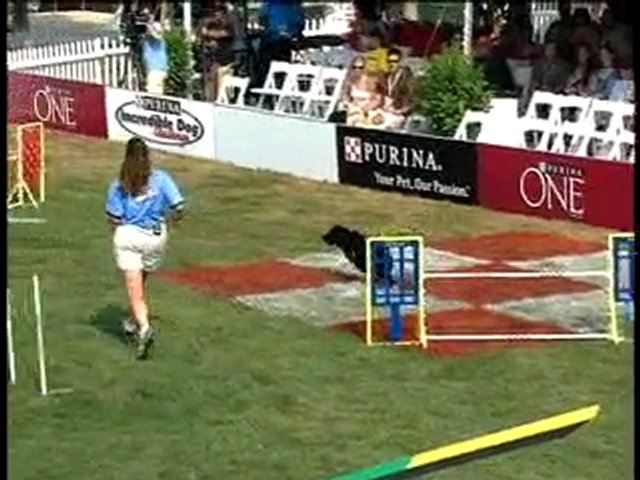 Dog Show: National Finals, Round I, Large Dog Agility Course