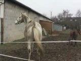 Eliott pète la forme !!!! 23 janvier 2010