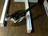mon chien et mon chat en saut
