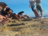 Liberación de Tortugas ::: Campamentos Mundo México