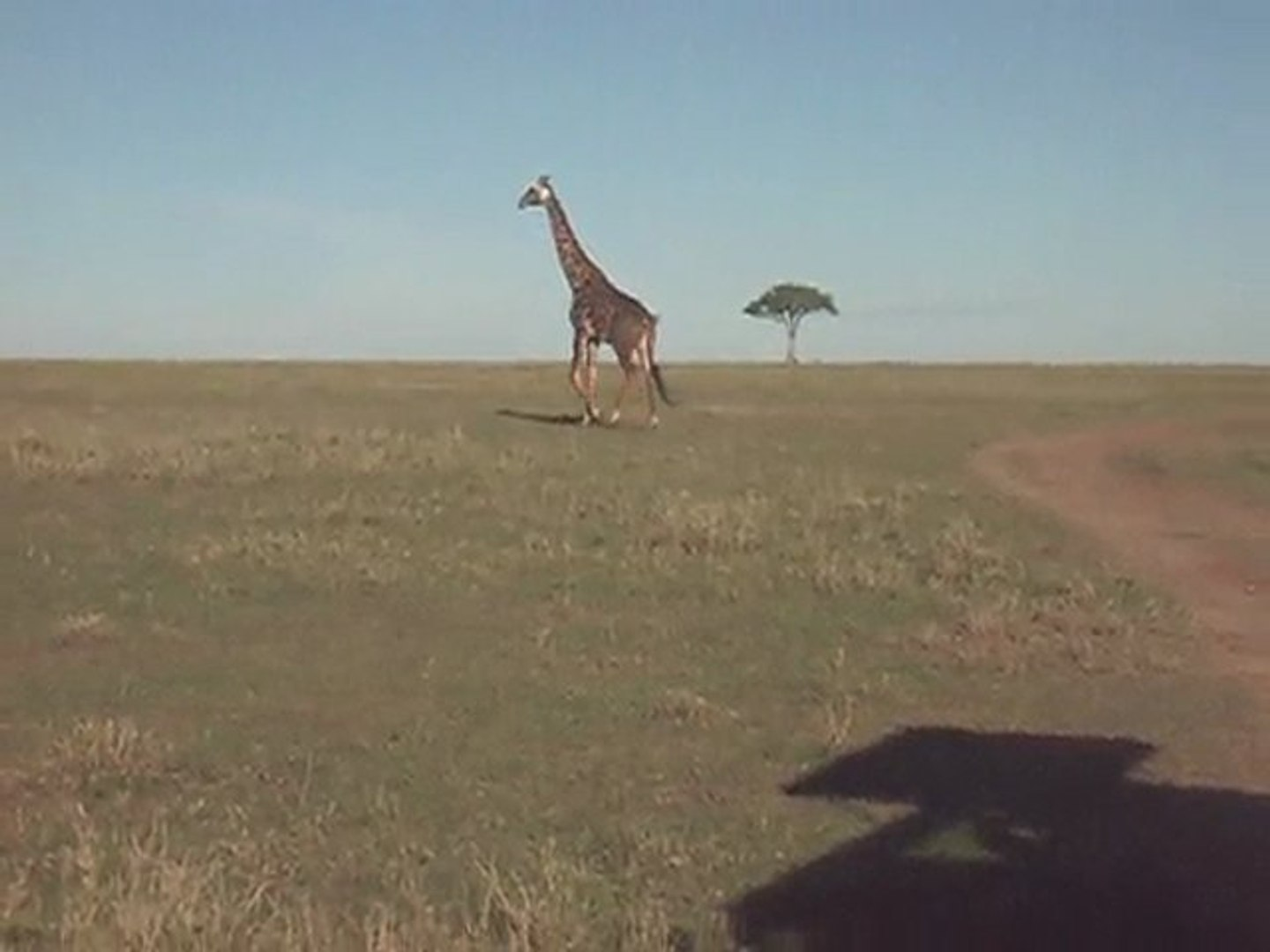 Travel to Africa with Claudious Tours and Safaris in Kenya