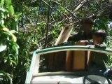Macaques libres / Free Macaques