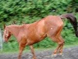 casey au gallop et au trot !!