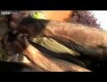 Des chimpanzés se filment dans un documentaire