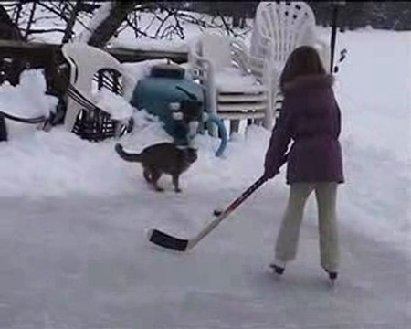 chat hockey sur glace