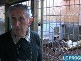 Trois lions saisis en Gironde et recueillis dans la Loire