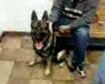 Shma and Doggy