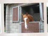 les chevaux les être les plus parfait
