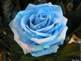 une jolie fleur de georges brassens par christian arnault