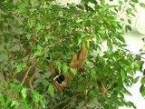 Assainir l'air intérieur de sa maison avec les plantes