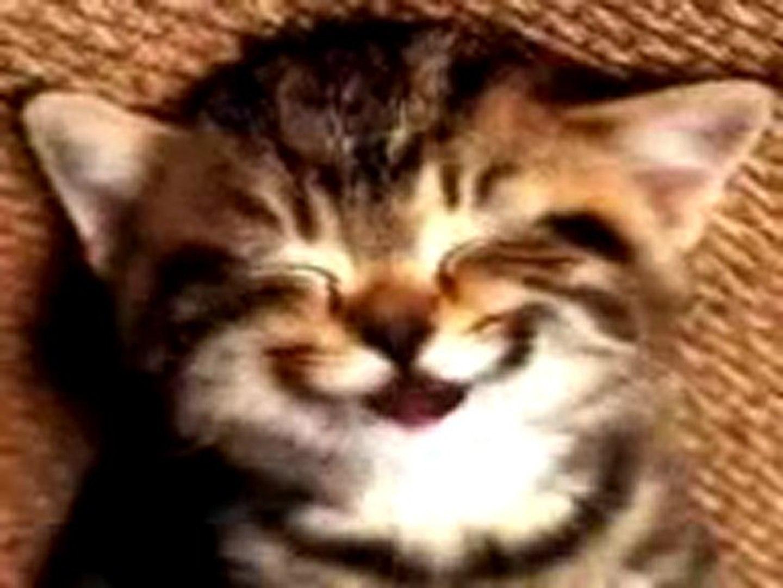 carte anniversaire chat qui chante chat chante joyeux anniversaire   Vidéo Dailymotion