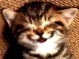 chat chante joyeux anniversaire