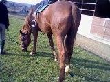 Centre Equestre Vicois <3