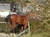 cheval centre equestre vieux bourg
