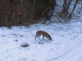 Balade ton chien à Metz au mont Saint Quentin (février 2010)