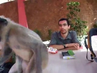 India - Hampi - Monkey wants biscuits