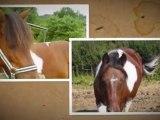 Un Poney ; Un Cheval ; Une jument
