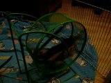 18 02 10 - Les petits nés le 1er Janvier 2010