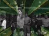 UFC - Frank Shamrock