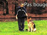 Educateur canin et garde à domicile à camors, Morbihan