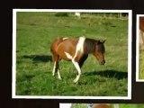 Un poney , Une jument