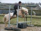 Frisia's Storm King étalon Welsh A, 4 ans