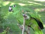 Kaufrausch in Lima sowie Papagei und Tukan in Amazonia