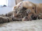 Comment prévenir la vieillesse chez les chats et chiens