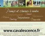 ventes chevaux poneys