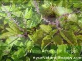AyurNatural Beauty - Health and Beauty Products