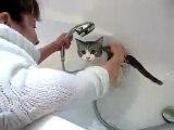 Pixel le chat prend un bain