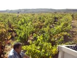 Visitas a bodega (Despedidas solteros La Rioja)