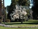 Printemps au Jardin Massey (Tarbes, Hautes-Pyrénées)