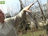 Actu24 - Comment tailler un arbre fruitier