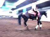 Concours d'equitation western, belgique