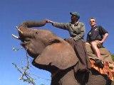Elephants Back Safari at Victoria Falls with Kingfisher Safaris