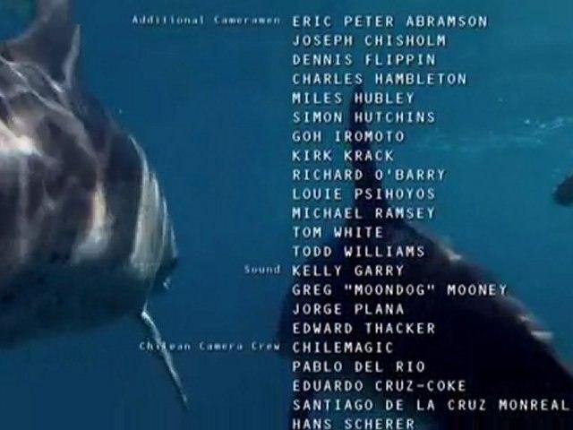 mangez du dauphins 6.6