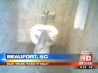 Shark Found In Toilet
