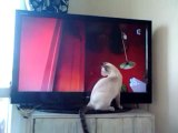 Chat chasse mouche tv