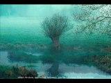 A hauteur d'arbres - Vaugrigneuse CE2/CM1/CM2