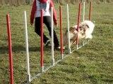 montage de mes chiens en agility