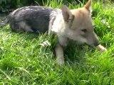 Ebene toujours dans l'herbe