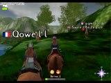 Chevaux sauvages de meo-mission-equitation