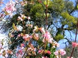 Papillons citrons avril 2010_7230