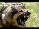 Stopping Dog Barking-Top 4 Tips On Stopping Dog Barking