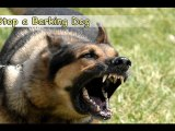 Stop a Barking Dog-Top 6 Tips On How to Stop a Barking Dog