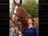 Quelques races de chevaux connus