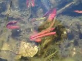 Ugly Garden Pond. Goldfish Pond in Early Spring 2010