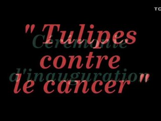 Des-tulipes-contre-le-cancer-2010